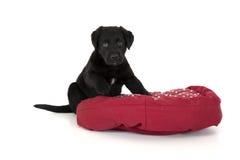 Uroczy czarny lab szczeniak na czerwonej poduszce Obrazy Stock