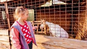 Uroczy dzieciak patrzeje małej kózki przy gospodarstwem rolnym szczęśliwego dziecka zdjęcia royalty free
