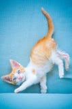 Uroczy dziecko kot z niebieskimi oczami Fotografia Stock