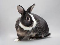 Uroczy dziecko królik na stałym tle Zdjęcia Royalty Free