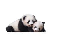 Uroczy dziecko pand 熊猫 Obrazy Stock