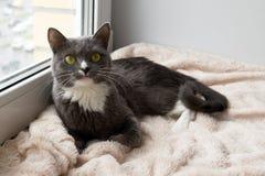 Uroczy i śmieszny biały kot z zielonymi oczami kłama blisko okno Zdjęcie Stock