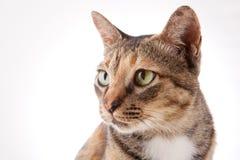 Uroczy kot Zdjęcia Royalty Free
