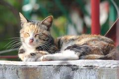 Uroczy kot Fotografia Stock