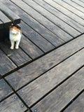 Uroczy kot zdjęcie stock