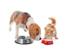 Uroczy kot i psi pobliscy puchary zdjęcia royalty free