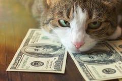 Uroczy kot kłama na dolarowych rachunkach Obrazy Stock