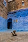 Uroczy kot, siedzi w Medina chefchaouen, Morocco, afryka pólnocna Kot liże jego jaźń w ulicie Marokański kot charcica zdjęcia stock