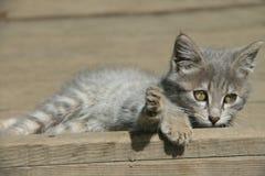 Uroczy kot w sunbath Obraz Royalty Free