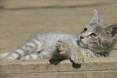 Uroczy kot w sunbath Zdjęcia Royalty Free