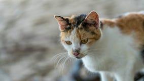 Uroczy kot Z Niezdarnym wyrazem twarzy fotografia stock