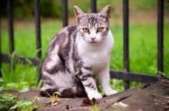 Uroczy kot z ogromnymi oczami zdjęcia stock