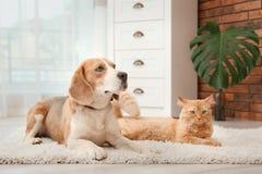Uroczy kota i psa lying on the beach na dywaniku w domu fotografia stock