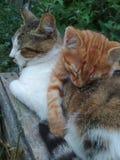 Uroczy koty śpią w lecie outdoors, w świeżym powietrzu obrazy royalty free