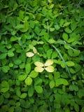 uroczy kwiatu liść Zdjęcie Stock