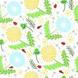 Uroczy kwiecisty wzór dandelions, ladybirds, opuszcza Zdjęcia Royalty Free