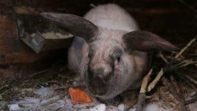 Uroczy młody królik w dużej drewnianej klatce przy gospodarstwo rolne domem zdjęcie wideo