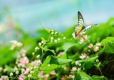 Uroczy motyle w pięknym ogródzie Zdjęcia Stock