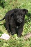 Uroczy niemieckiej bacy szczeniak w ogródzie Obrazy Royalty Free