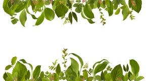 Uroczy ogrodowy dżungla liścia łąki tło Fotografia Stock