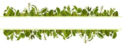 Uroczy ogrodowy dżungla liścia łąki tło Obraz Royalty Free