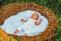 Uroczy osesek Oseska niemowlak obudzony w ściąga Dzieciństwa i macierzyństwa ochrona Bezpieczny macierzyństwo serwis dostawczy obrazy royalty free