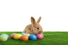 Uroczy owłosiony Wielkanocny królik i farbujący jajka na zielonej trawie zdjęcia royalty free