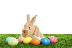 Uroczy owłosiony Wielkanocny królik i farbujący jajka na zielonej trawie zdjęcie royalty free