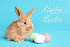 Uroczy owłosiony Wielkanocny królik i farbujący jajka na koloru tle fotografia royalty free
