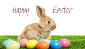 Uroczy owłosiony Wielkanocny królik i farbujący jajka na zielonej trawie fotografia stock