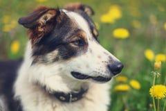 uroczy piękny psi portret Fotografia Stock