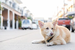 Uroczy pies na drodze Obrazy Royalty Free