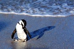 uroczy pingwin Fotografia Stock