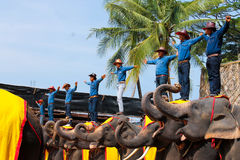 Uroczy pobyt, słonia przedstawienie, Tajlandia Fotografia Royalty Free