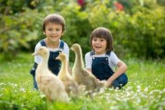 Uroczy preschool dzieci, chłopiec bracia, bawić się z małym d Zdjęcie Stock
