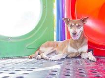 Uroczy przybłąkany pies Fotografia Royalty Free
