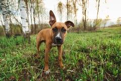 Uroczy purebred pies w parku Obraz Stock