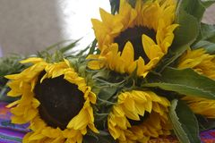 Uroczy słoneczniki na stole zdjęcie stock