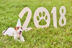 Uroczy szczęśliwy lisa teriera pies przy parkiem 2018 nowy rok greetin Zdjęcia Royalty Free