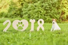 Uroczy szczęśliwy lisa teriera pies przy parkiem 2018 nowy rok greetin Fotografia Royalty Free