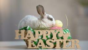 Uroczy Wielkanocny królik żuć siano w koszu, wakacyjna dekoracja, wita znaka zdjęcie wideo