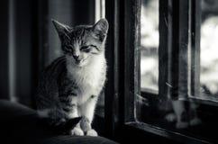 Uroczy zestawu zwierzę domowe Zdjęcie Royalty Free