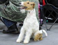 Uroczy zwierzęta przy psim przedstawieniem fotografia stock