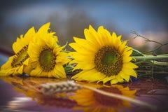 Uroczych słońce kwiatów zamknięty up Obraz Stock