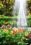 uroczyste ogród Zdjęcie Stock