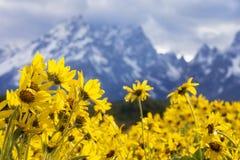 Uroczyste teton góry z kwiatami w przedpolu Obrazy Royalty Free