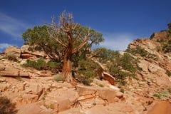 Uroczystego jaru park narodowy, Arizona - usa Obraz Stock