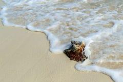 uroczysty Caicos turek zdjęcie stock