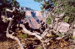 Uroczysty Canyon_7 Obraz Stock