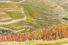 Uroczysty cru winnica Cote Rotie Fotografia Royalty Free